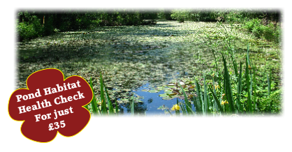 Pond Habitat 